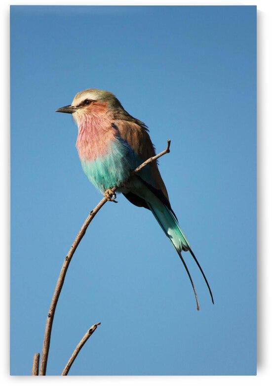 Birds get lonely too by Reg Bender