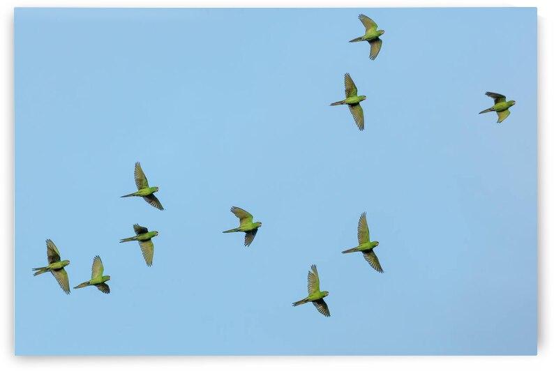 Birds flock too by Reg Bender