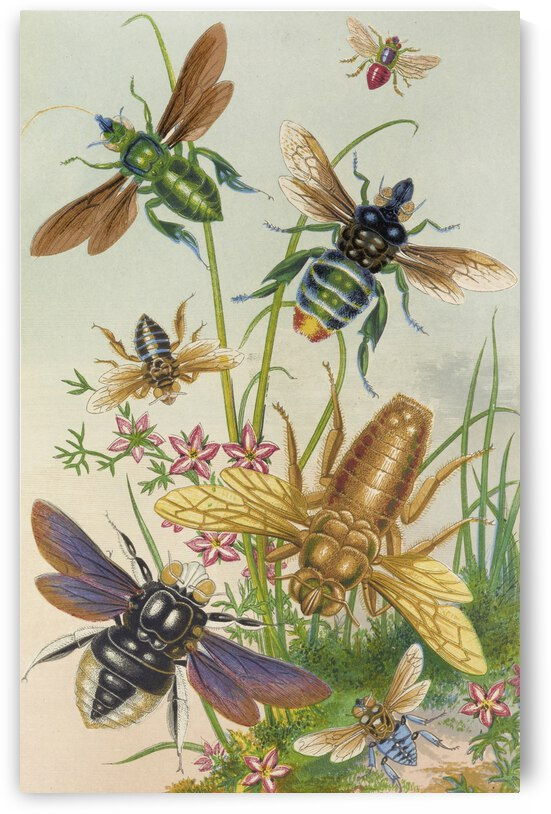 Barret and Sons Bees And Their Conterfeits 1871 by TOPARTGALLERY