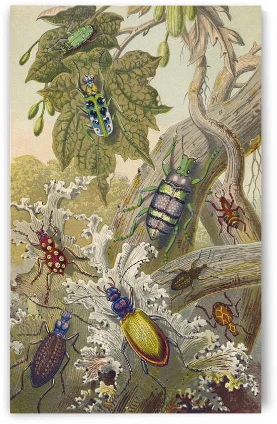 Barret and Sons British Bees And Their Foreign Relatives 1871 by TOPARTGALLERY