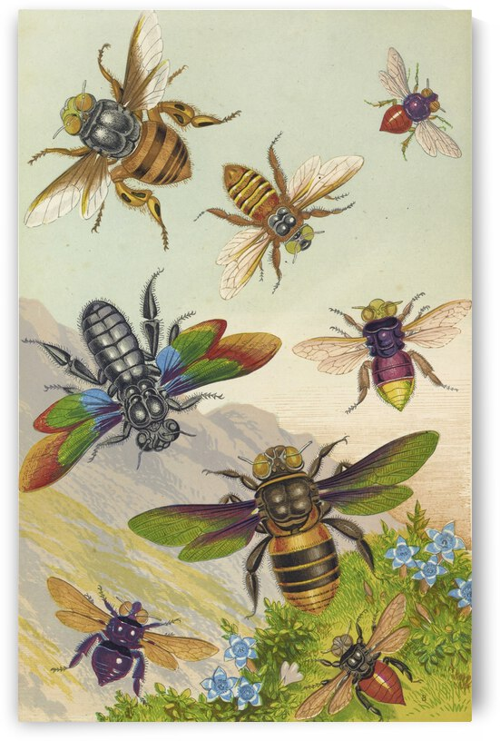 Barret and Sons Beautiful Exotic Bees 1871 by TOPARTGALLERY