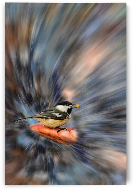 Hand feeding wild bird by PitoFotos