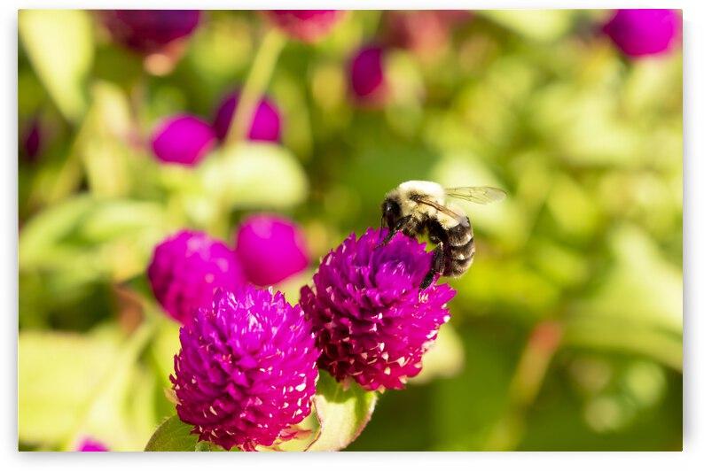Bee utiful by Belle Smith