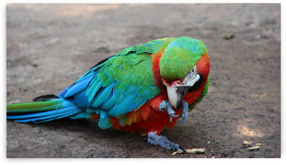 Macaw by Marcelo Jose da Silva de Magalhães