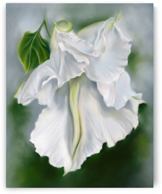 White Moonflower Unfurling in the Evening by MM Anderson