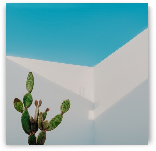 Cactus on the background of abstract architecture with an open air.  by Ievgeniia Bidiuk