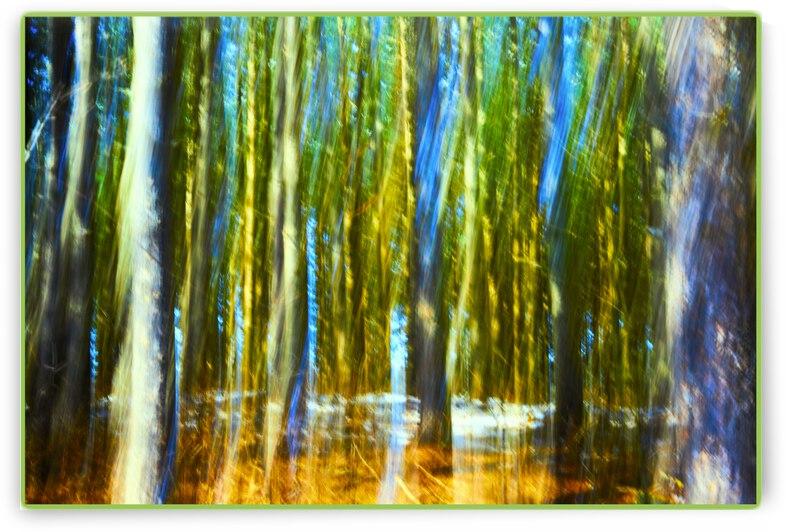Pines  17Print by Jean Pierre Begin