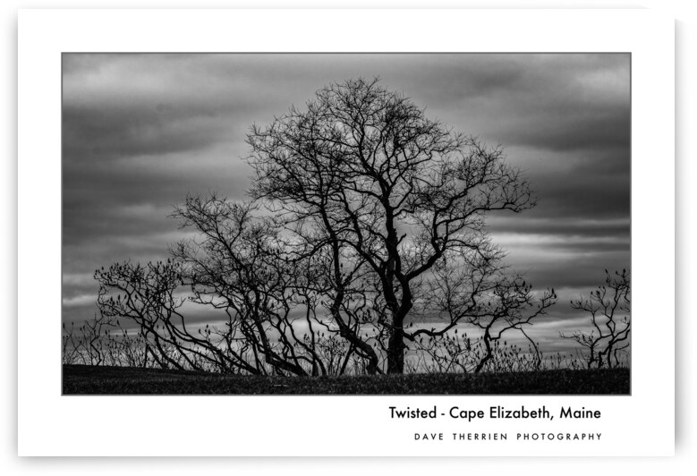 Twisted  by Dave Therrien