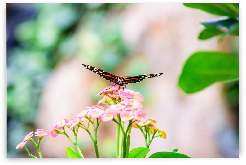 Butterfly Balance by Monica Roberts Photography