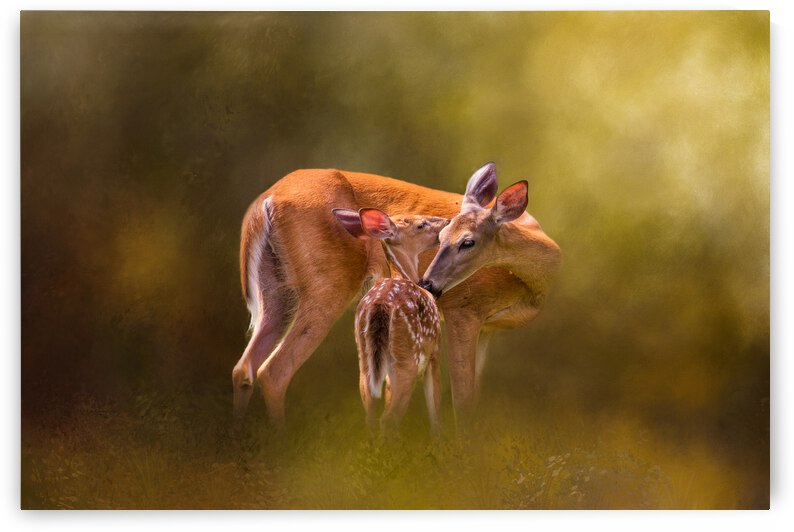 Mom & Babe by Michel Soucy