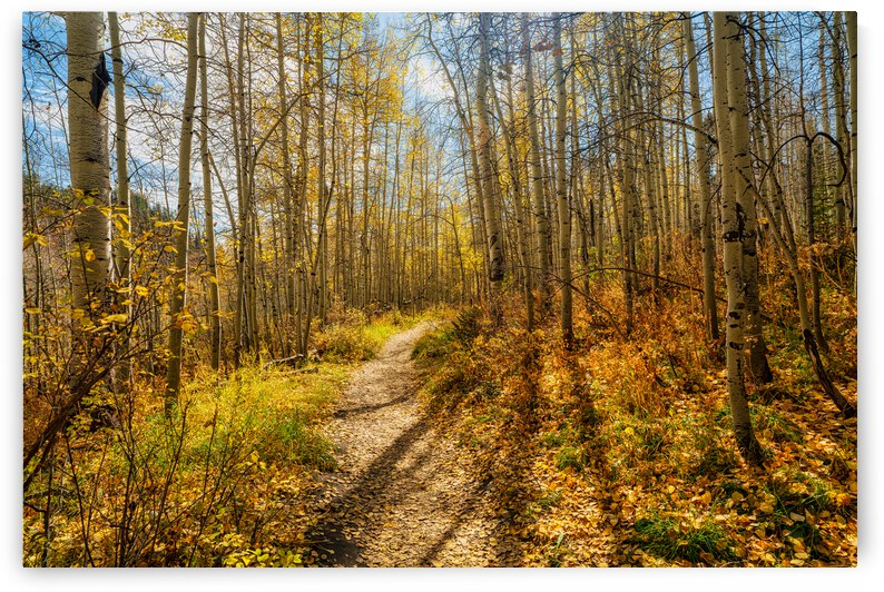 Walk Through the Aspens  by Derrick Cochran
