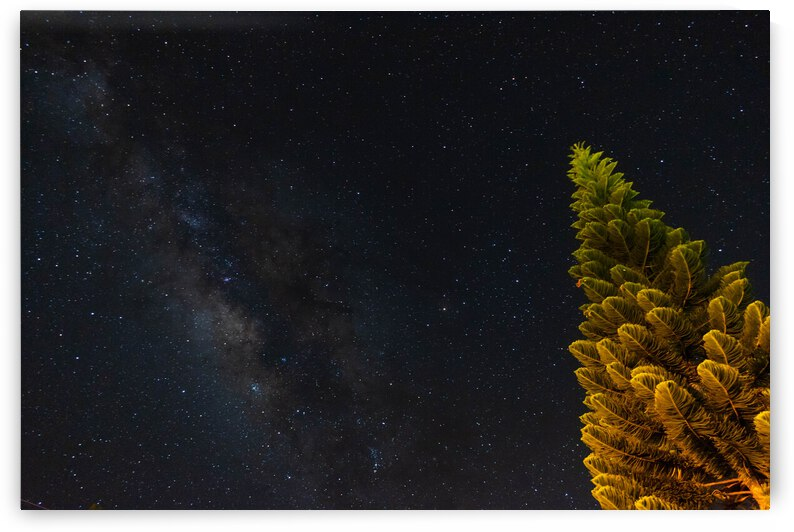 PINE TREE AMONG THE STARS by Noah DeCambra