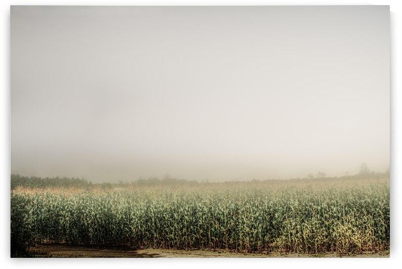 Summer Dust Cornfield by Bob Orsillo