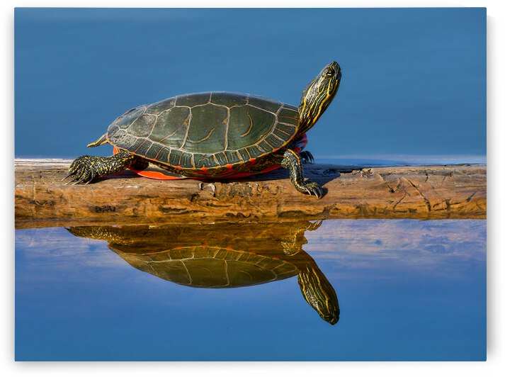 Perfect reflection by Andrew Wasik