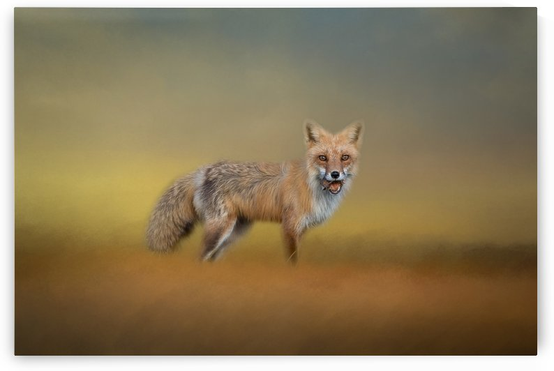 Foxy by Michel Soucy