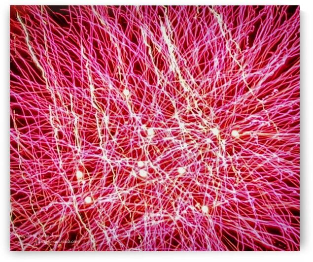 Pink Sparklers by Jeremy Lyman