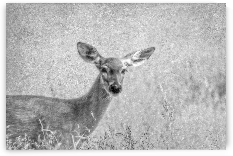 Pretty Doe by Michel Soucy