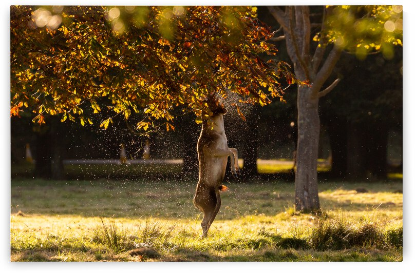 Deer Shower by Timmy Keane