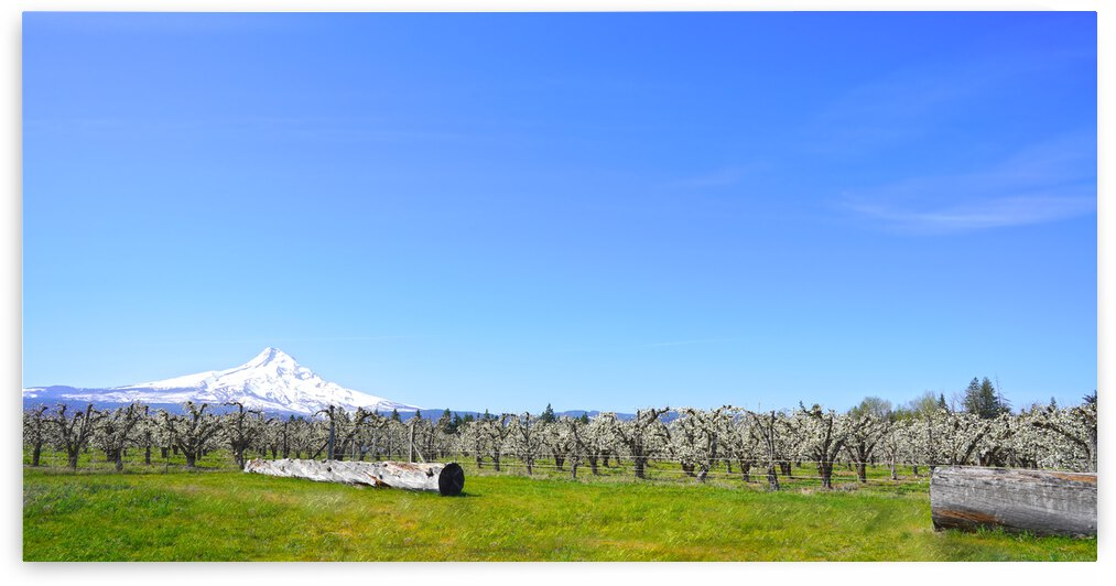 Spring in the Mountain Valley -  Columbia River Gorge   Mount Hood by 1North