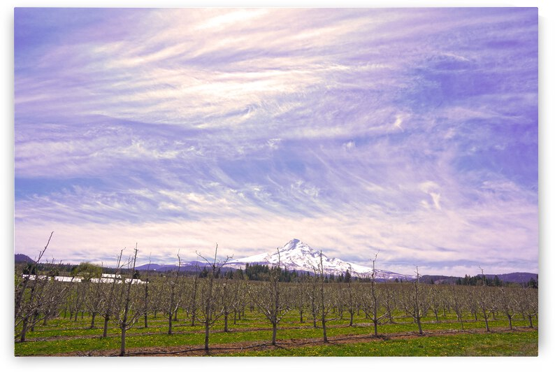 Mount Hood Under a Painted Sky by 24