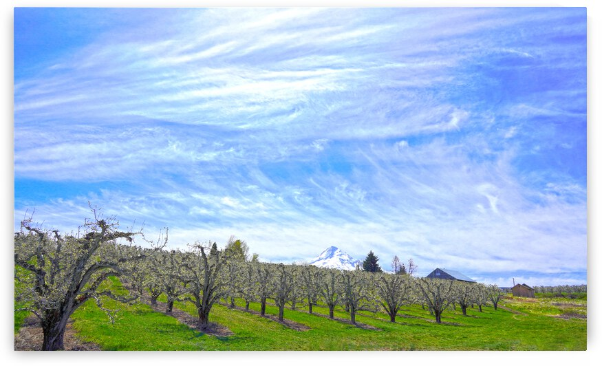 Spring in the Orchard Hood River Valley Oregon by 24