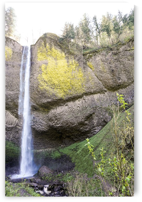 The Falls in Spring - Columbia River Gorge Oregon by 24