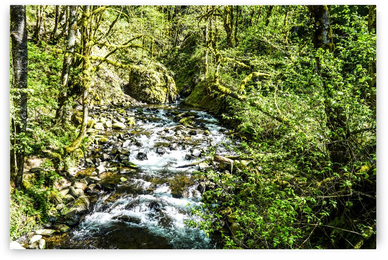 Spring Runoff in the Gorge - Oregon National Scenic Area Canyon by 24