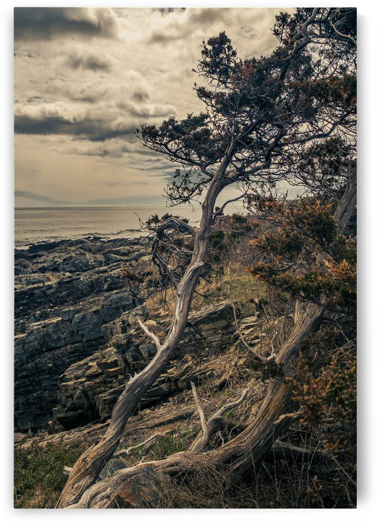 Twisting on the Cliffs by Dave Therrien