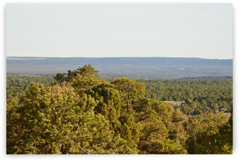 Aerial View Of Vast Pinyon Forest Against Horizon by PieLar Inspirations