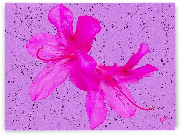 Think Pink by Liam David