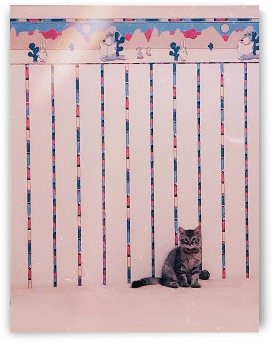 Kitten Kitsch by J Gilbert Photography