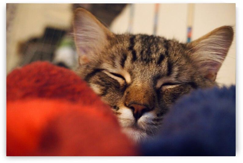 Cat Nap by J Gilbert Photography