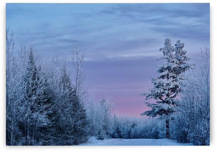 Winter Wonderland  by J Gilbert Photography