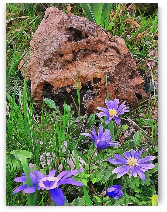Blue Anemone with Rock by Dorothy Berry-Lound