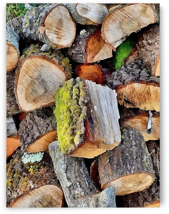 Log Pile Seasoning 2 by Dorothy Berry-Lound