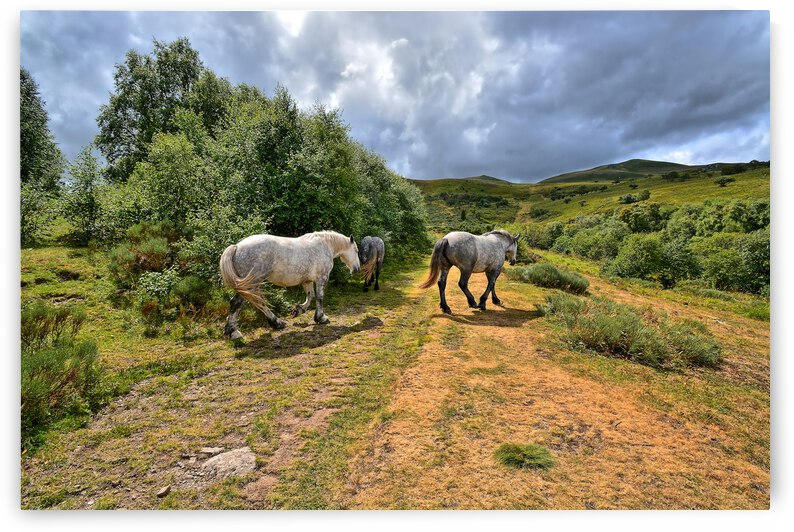auvergne sauvage by photo art 30 exemplaires