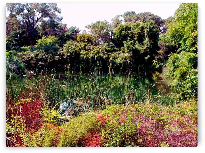 Paysage Zen landscape 3 by Createm