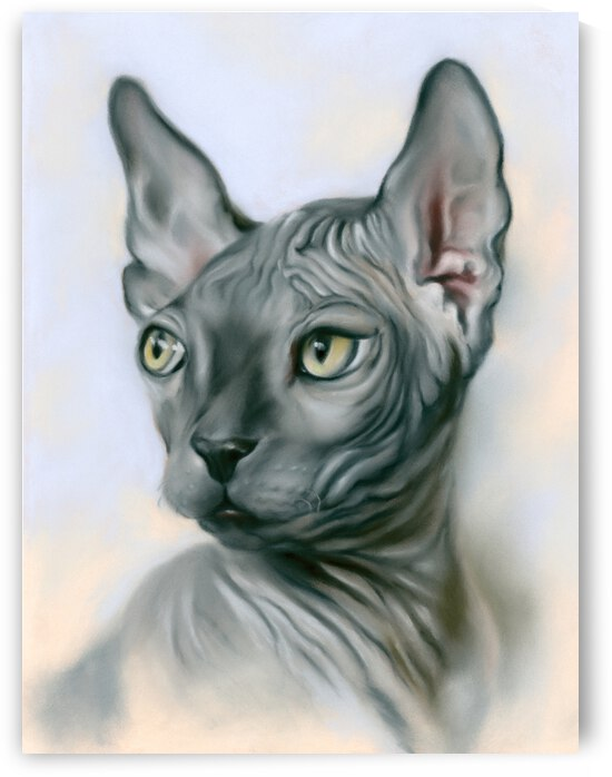 Sphynx Cat Gray by MM Anderson