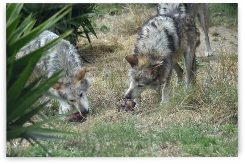 Wolves 1 by Desirae Blackmore