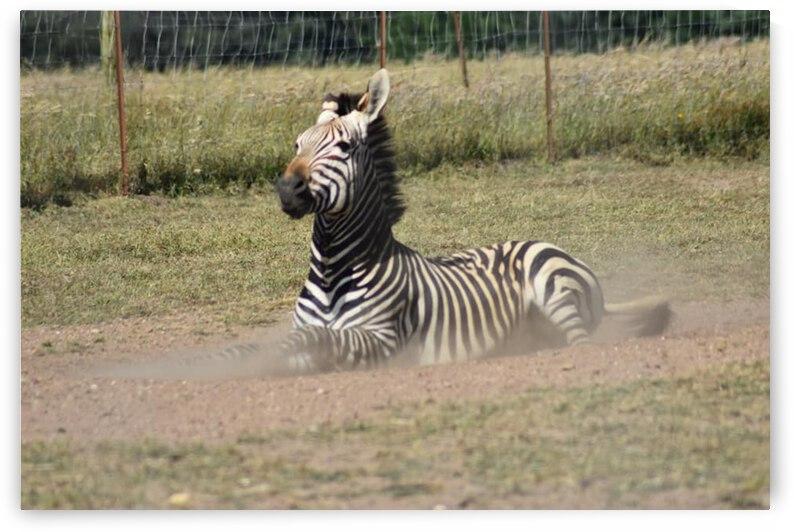 Zebra 1 by Desirae Blackmore