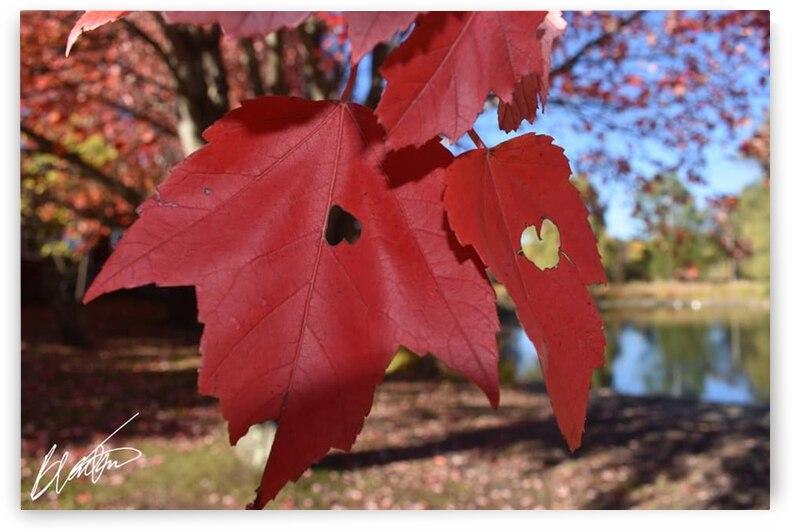 Leaf by Desirae Blackmore