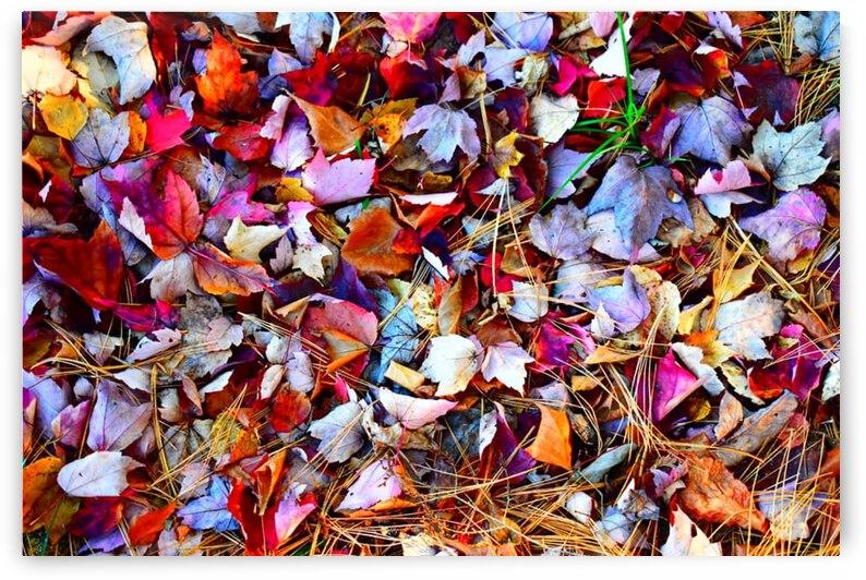 Fall 1 by Desirae Blackmore