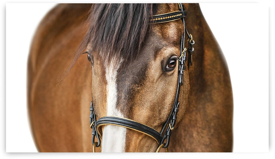 Horse Portrait White Background by Clever Lark Photo
