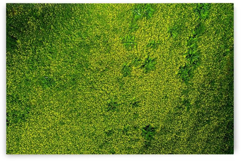 Jaune et vert by Jean Gaboury