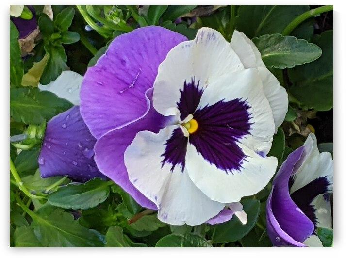 White & Purple by A Herrera