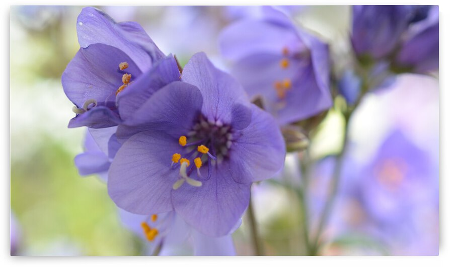 Blue Floral Photograph by Katherine Lindsey Photography
