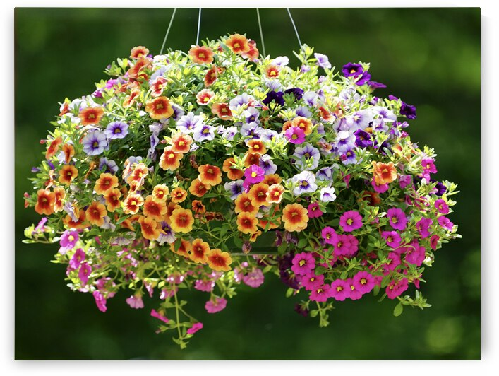 Flower Basket by Scott Deyo