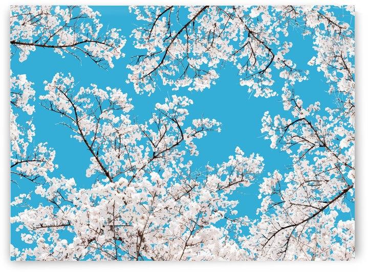 White Blossom by 83 Oranges