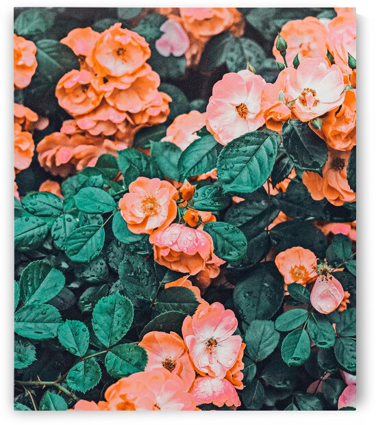 Vintage Blossom II by 83 Oranges