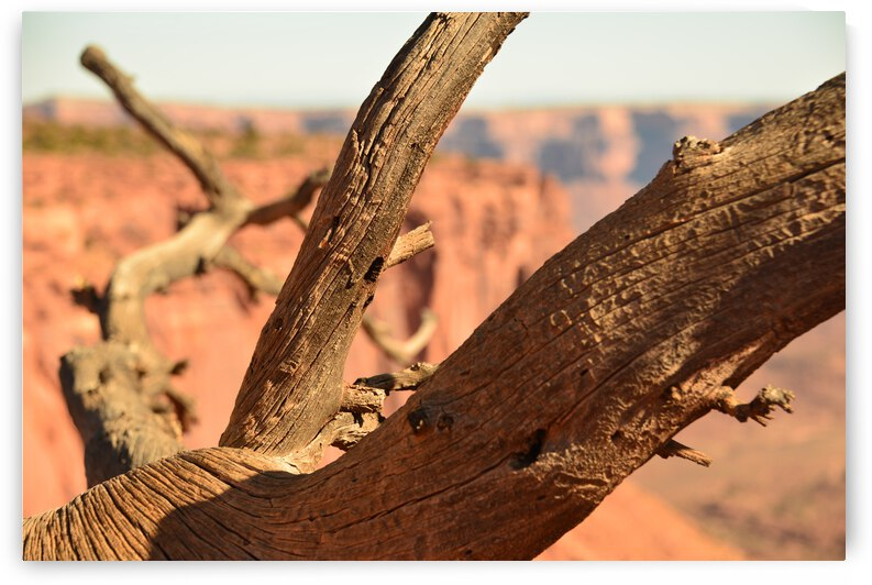 Old Juniper Branches by PieLar Inspirations